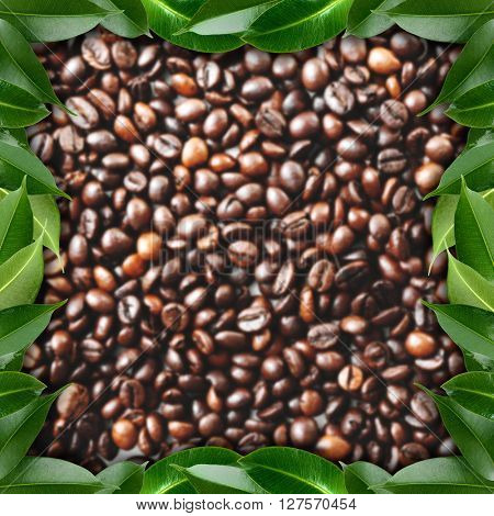 Frame made of coffee beans and green fresh leaves