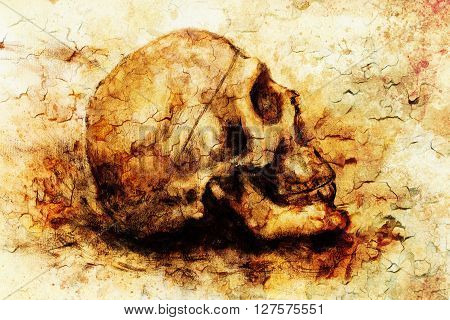 painting skull  on paper and sepia background with desert crackle