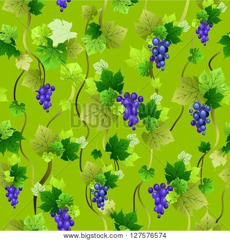Blue grapes seamless pattern on green background. Blue grapes seamless pattern. The natural design banner,ticket, leaflet and so on.
