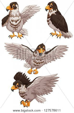 Four eagles in different poses illustration