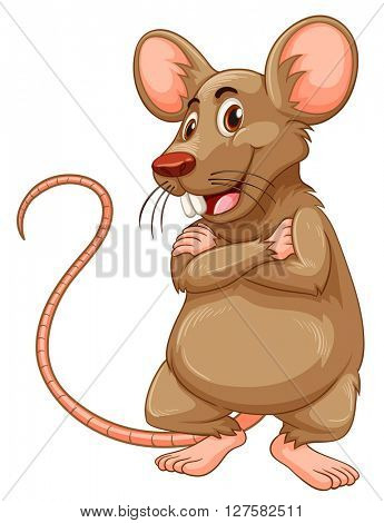 Mouse with brown fur illustration