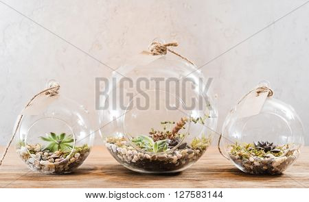 mini succulent garden in glass terrarium