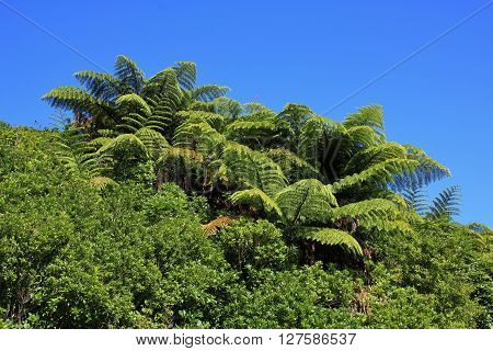 Typical vegetation in New Zealand. Scene on the Queen Charlotte Track.