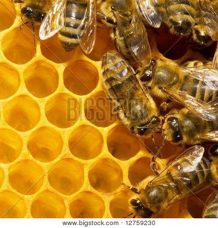 Macro de trabajo abeja en honeycells.