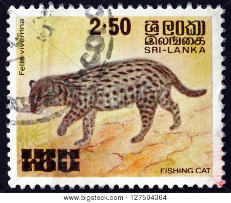 SRI LANKA - CIRCA 1981: a stamp printed in Sri Lanka shows Fishing Cat Prionailurus Viverrinus is a Medium-sized Wild Cat of South and Southeast Asia circa 1981