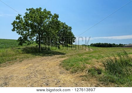 Rural Dirt Road with Walnut Tree Along Side of It with Copy Space