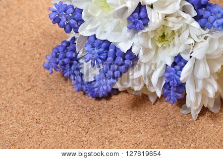 Bouquet Of White Chrysanthemum And Blue Grape Hyacinth On Cork Background. Studio Lights And Shadows