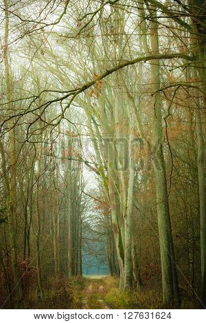 Fall landscape. Country road in the autumn forest. Misty hazy autumnal day.
