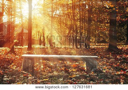 Landscape with wooden bench under bright sunlight in autumn forest. Soft focus processing. Autumn rustic landscape