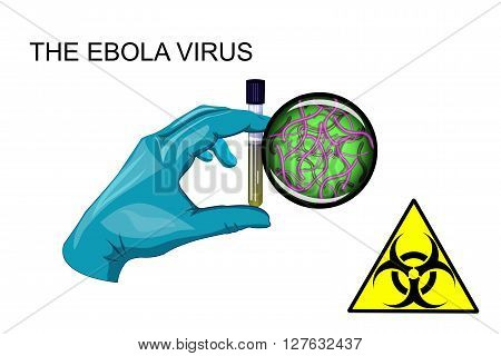 illustration of a gloved hand with a vial of Ebola virus