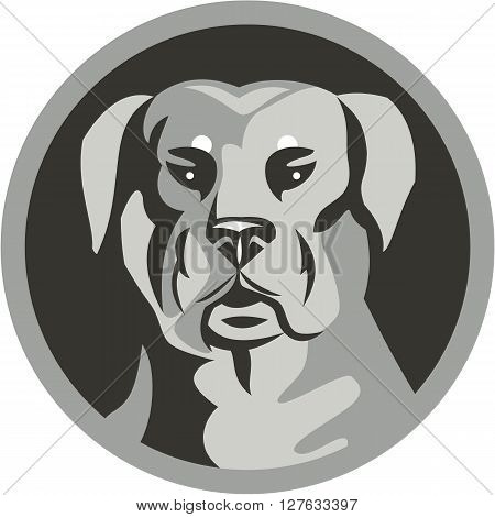 Black and white illustration of a Rottweiler Metzgerhund mastiff-dog guard dog head viewed from the front set inside circle done in retro style.