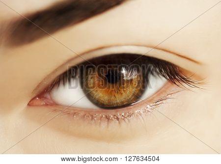 macro eye, macro shot of woman eye without makeup ** Note: Visible grain at 100%, best at smaller sizes