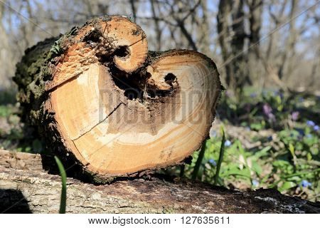 wooden log in spring forest with heart-shaped cut off