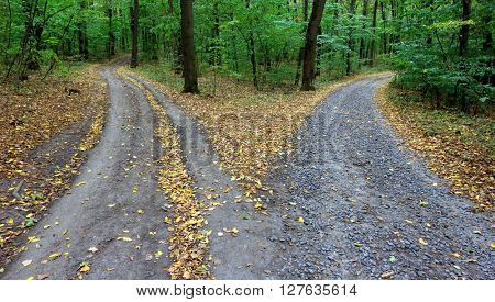 Landscape with fork rural roads in autumn forest