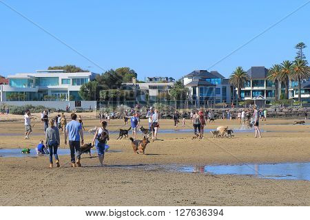MELBOURNE AUSTRALIA - APRIL 25, 2016: Unidentified people walk dogs in Brighton beach Melbourne.