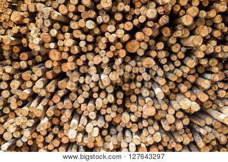 Stock of eucalyptus logs in a lumber yard