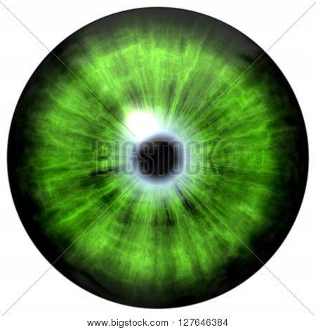 Isolated Green Eye. Illustration Of Green Blue Stripped Eye Iris, Light Reflection
