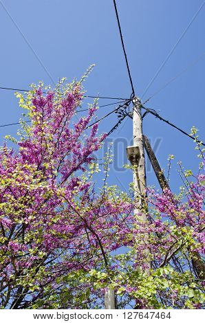 Pink flowering bush by electricity pole against blue sky on sunny day