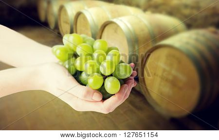 healthy eating, dieting, vegetarian food and people concept - close up of woman hands holding green grape bunch over wine cellar background