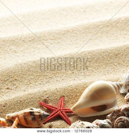 conchas do mar com areia como plano de fundo