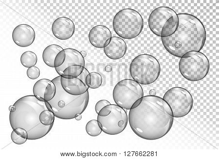 bubbles on transparent background. vector soap water bubbles