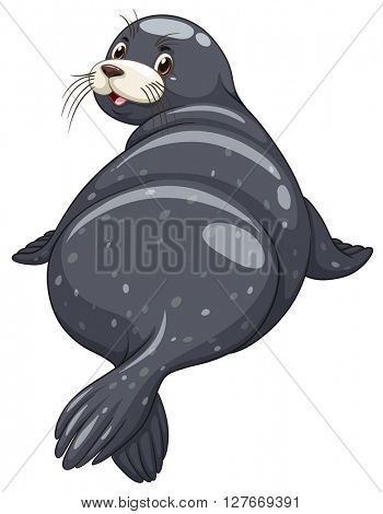 Seal with black skin turning back illustration