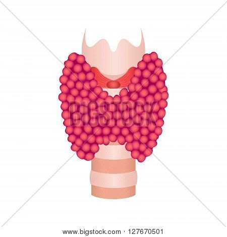 Thyroid gland vector illustration. Thyroid gland symbol on white background. Thyroid diagram sign. Thyroid anatomy. Thyroid icon. Medical concept.