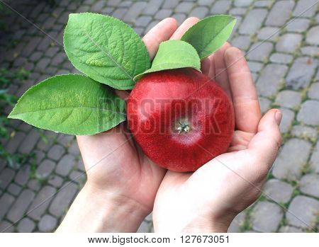 farmers hands with red apple, organic fruit