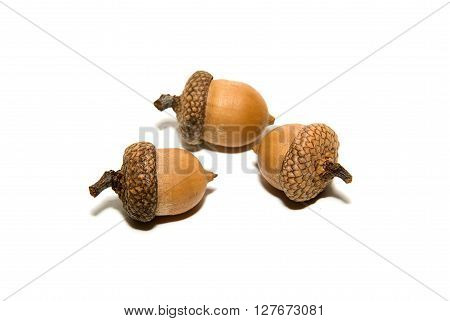 Three brown acorns with caps on over white