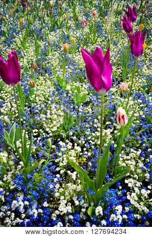 Spring flowers in a meadow
