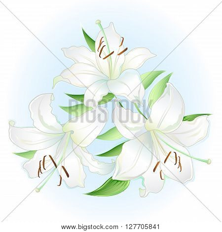White lilies bouquet; isolated on white background (vector illustration)