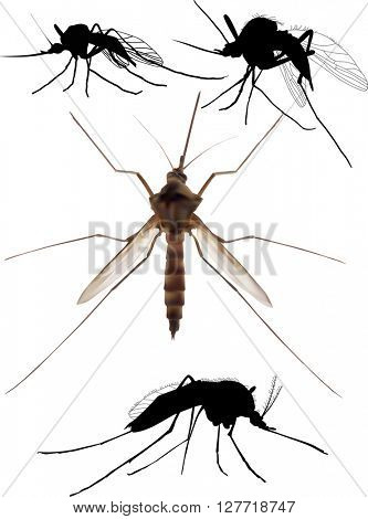 illustration with four mosquito isolated on white background