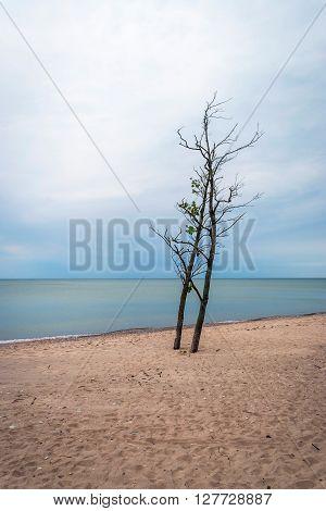 Lonely Tree On Abandoned Beach, Liepaja, Latvia