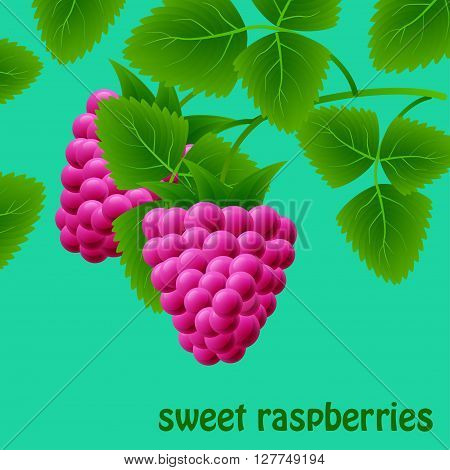 Red, Juicy, Sweet Raspberries On A Branch For Your Design. Vector