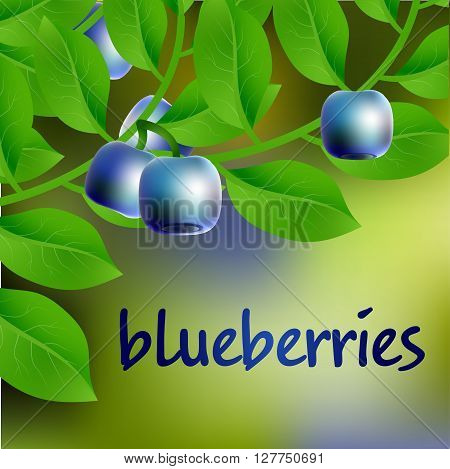 Blue-black, Juicy, Sweet Blueberry On A Branch For Your Design. Vector