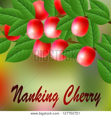 Red, Juicy, Sweet Nanking Cherry On A Branch For Your Design. Vector