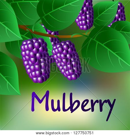 Blue, Juicy, Sweet Mulberries On A Branch For Your Design. Vector
