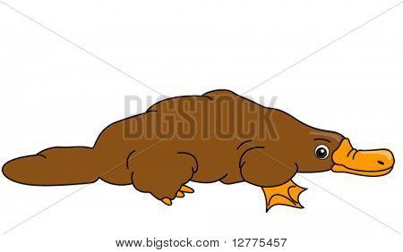 Platypus - Vector