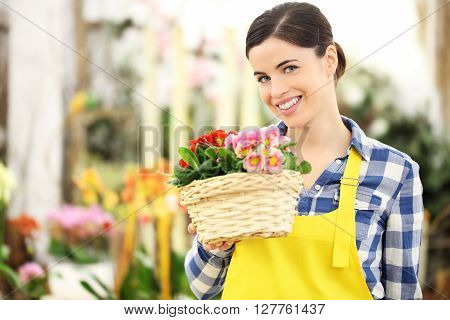 florist woman smiling with white wicker basket flowers of primroses