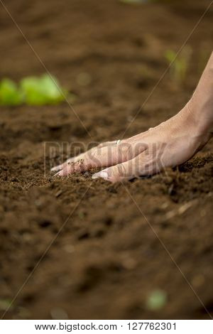 Closeup of female hand touching a brown fertile soil in the garden in gardening concept.
