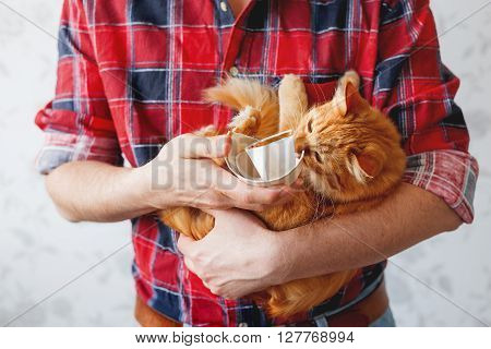 Man in plaid tartan shirt holds a broken white cup and cute ginger cat. Cat broke a cup. Damaged mug with golden decoration.