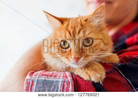 Man in red plaid tartan shirt holding a curious ginger cat.