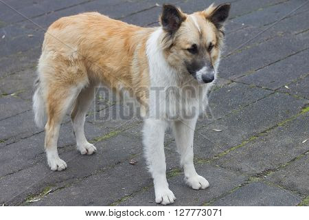 Stray dogs on street makes people afraid