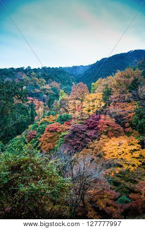 Beautiful Fall Foliage in the morning fog Arashiyama Kyoto Japan