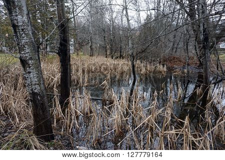 A swamp in a residential area of Harbor Springs, Michigan during December.