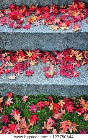 Fallen maple leaves on the cement stairs way and green grass
