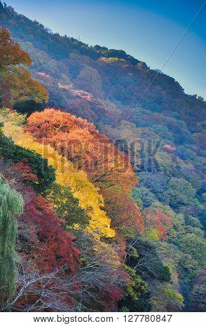 Leaves changing color in Arashiyama Kyoto Japan