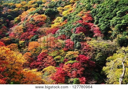Autumn mountain landscape beautiful view of the forest and meadow