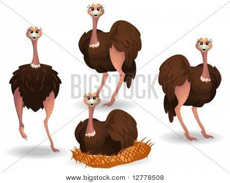 Ostrich - Vector