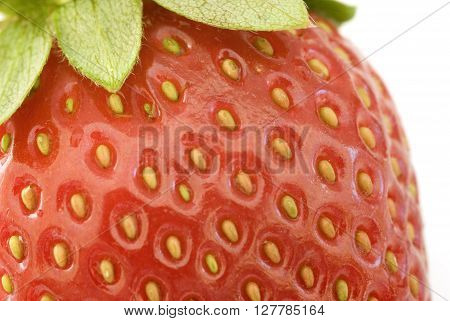 Macro view of a ripe red juicy strawberry showing the golden achenes and fresh green leaves on the stalk
